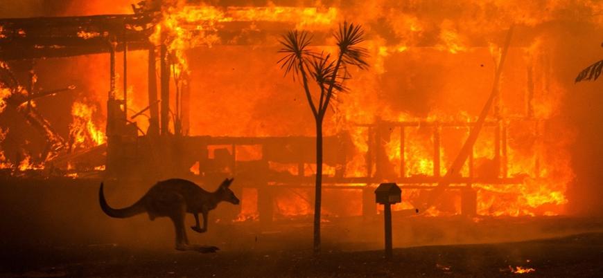 'Avustralya yangınlarında üç milyar hayvan telef oldu'