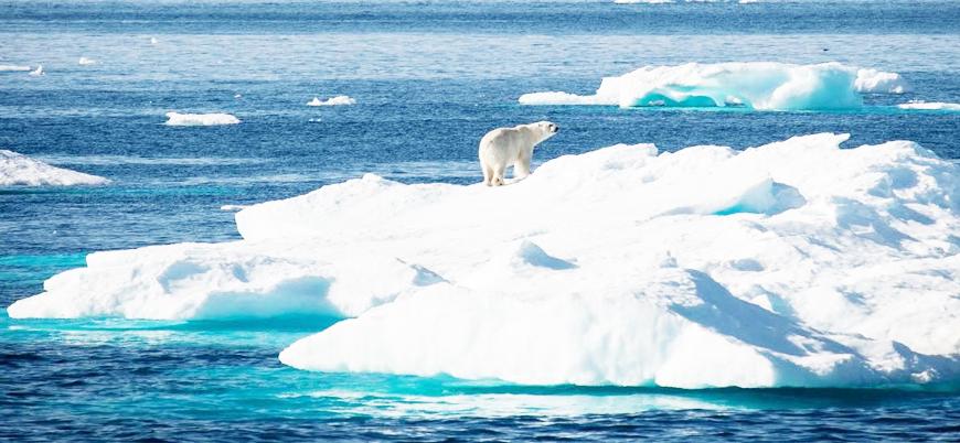 Kuzey Kutbundaki buzullar 2035'te tamamen yok olabilir