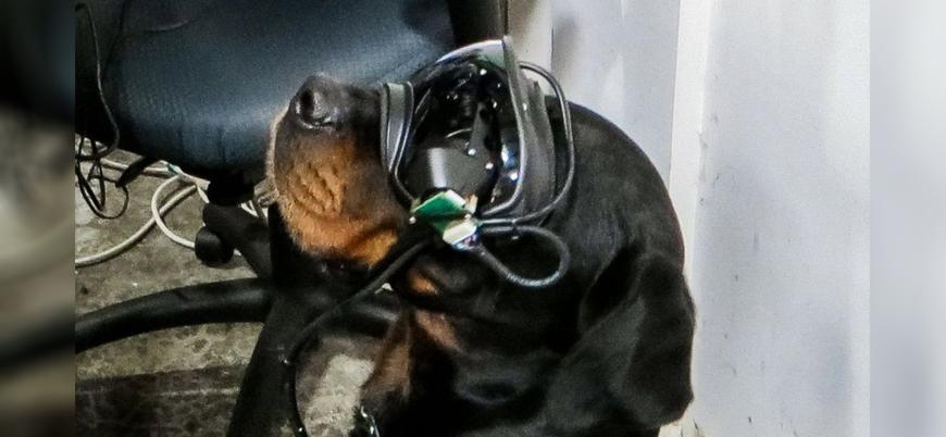 ABD ordusu, patlayıcı arayan köpeklerde artırılmış gerçeklik teknolojisini test ediyor