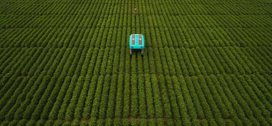 Google robot çiftçileri tarlaya sürdü