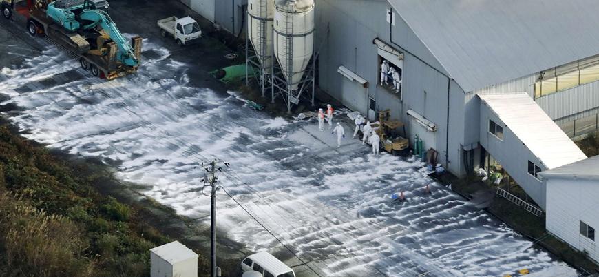 Japonya'da 2.5 milyon hayvan kuş gribi nedeniyle itlaf edildi