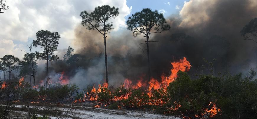 ABD ve Kanada'da yüksek sıcaklıklar yangın riskini artırıyor
