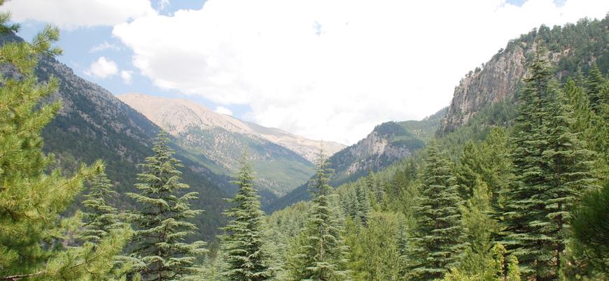 Türkiye'nin ormanları dosyası