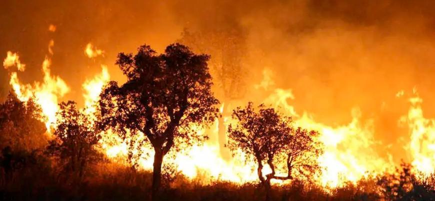 Cezayir yangınlarında ölü sayısı 69'a yükseldi