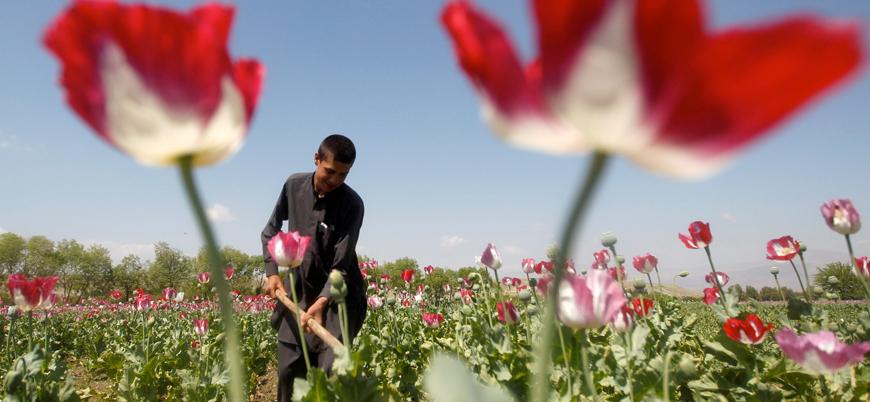 """""""Taliban afyonun ham madesi olan haşhaşın ekimini yasaklamaya başladı"""""""