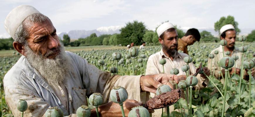 Taliban'ın haşhaş yasağı sonrası uyuşturucu pazarı krize girdi