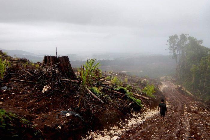 2016 yılında 200 çevreci aktivist öldürüldü
