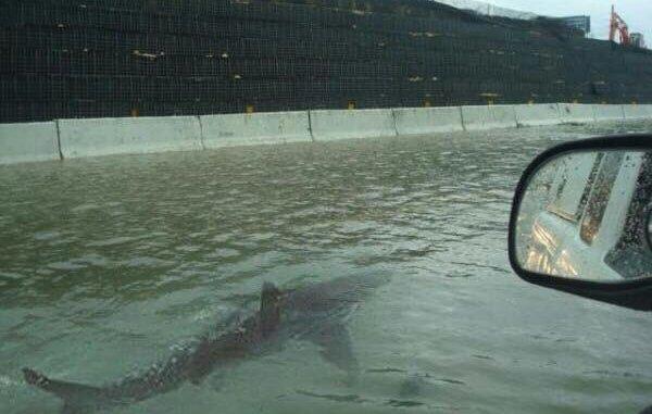 Sel sularında yüzen köpek balığı fotoğrafı Fox Newse özür diletti 23