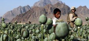 Amerikan işgali Afganistan'da uyuşturucunun altın çağını başlattı