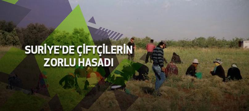 Suriye'de çiftçilerin zorlu hasadı
