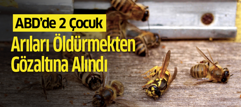 ABD'de iki çocuk arıları öldürmekten gözaltına alındı